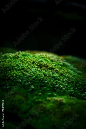 Fotografie, Obraz Beautiful green moss on the floor wallpaper background.