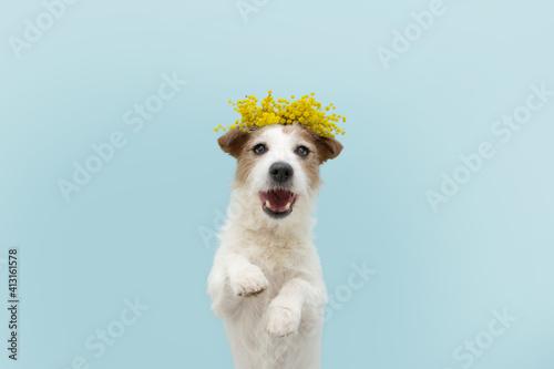 Fotografia, Obraz Dog spring