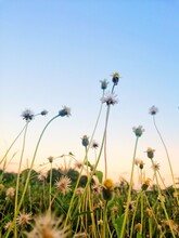 Close-up Of Flowering Plants On Field Against Clear Sky