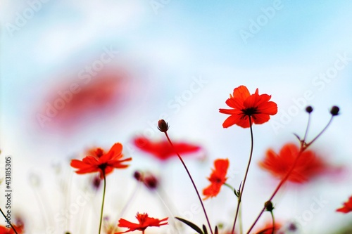Fototapety, obrazy: Close-up Of Red Flowering Plants