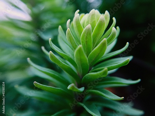 Photographie Close-up Of Succulent Plant