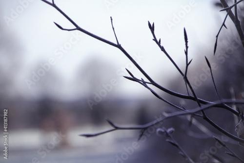 Obraz na plátně Close-up Of Twigs Against Sky