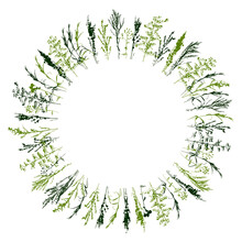 Round Frame With Grass Silhouettes - Wild Herbs Isolated On White - Herbal Elements For Spring And Summer Natural Design