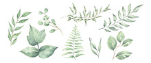 Green Leaves Elements Collection - For Bouquets, Wreaths, Arrangements, Wedding Invitations, Anniversary, Birthday, Postcards, Greetings, Cards, Logo. Watercolor Floral Illustration Set.