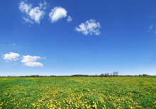 Idyllic View, Green And Flowery Meadow