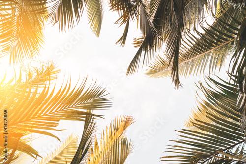 Obraz Copy space of tropical palm tree with sun light on sky background. - fototapety do salonu