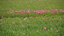 Pink Flowering Plants In Meadow