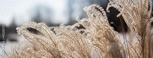 Fotografie, Obraz Dry grass windswept against the sky. Natural background