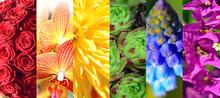 Regenbogenfarbe Mit Blumen Motiv, Collage, Kreaiv