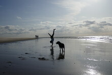 Silhouette Girl Doing Handstand By Dog At Beach
