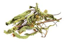 Dried (Dry) Bidens Tripartita Medicinal Herb. Also Known As Three-Lobe Beggartick, Three-Part Beggarticks, Leafy-Bracted Beggarticks Or Trifid Bur-Marigold. Isolated On White Background.