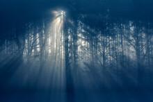 Wald Mit Kahlen Bäumen Im Nebel Mit Sonnenstrahlen