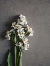 Frühlingsblumen Auf Grauem Untergrund