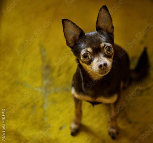 Fototapeta Portrait Of Cute Puppy