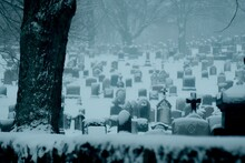 Bare Trees At Snow Covered Cemetery