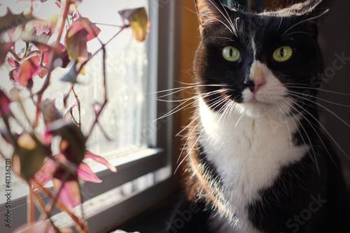 Fototapeta Close-up Portrait Of A Cat obraz