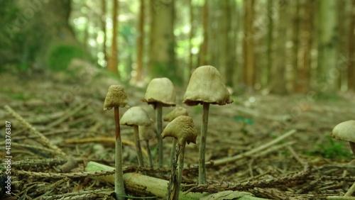 Obraz na plátně Close-up Of Mushrooms Growing In Forest