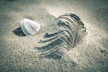 Close-up Of Seashell And Feather On Sand At Beach