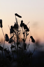 Close-up Of Silhouette Flowers Against Sky During Sunset
