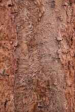 The Structure Of A Tree Trunk Infested With A Pest. 02-01-2021, Middle Bohemia, Czech Republic.