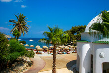 Palm Trees And Thatched Roof Parasols By Sea