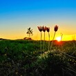 Flower Growing On Field Against Sky During Sunset
