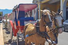 Carro Y Caballos, Nicaragua, 10 De Enero 2019