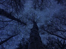 Directly Below Shot Of Bare Tree At Night
