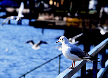 Seagull Perching On Railing Against Sea