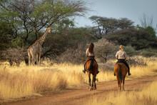Southern Giraffe Watches Two Women On Horseback