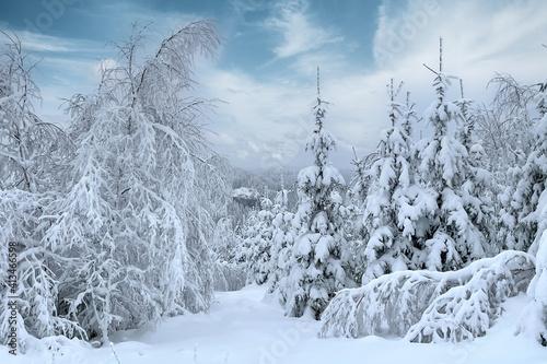 Winterlandschaft im Thüringer Wald © Henry Czauderna