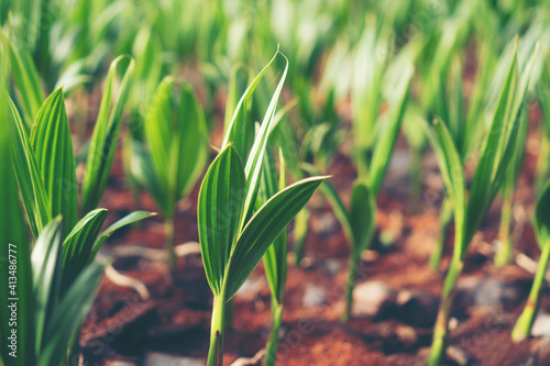 Close-up Of Crops Growing On Field Poster Mural XXL