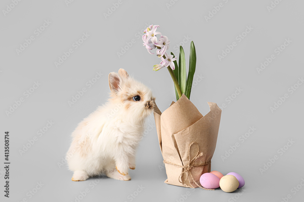 Fototapeta Cute rabbit and blooming spring plant on grey background