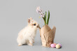Cute rabbit and blooming spring plant on grey background