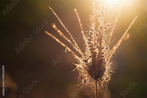 Fotografie, Obraz grass in the sun