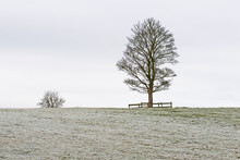 Bare Trees In Rural Countryside Panoramic Winter Landscape