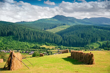 After Haymaking, Drying Grass On A Background Of Green Forest In The Carpathian Mountains With White-blue Sky