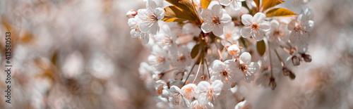 background from blooming apple tree. spring mood. spring flowers Fototapet