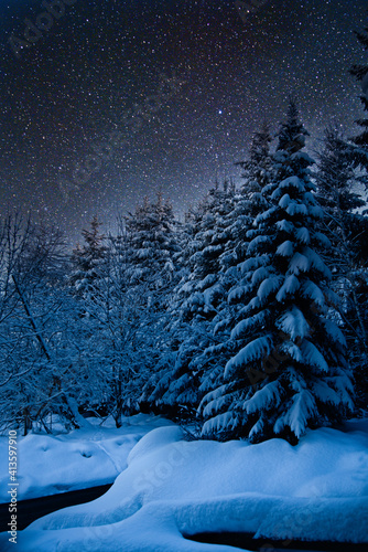 Slika na platnu la forêt, enneigée, dort