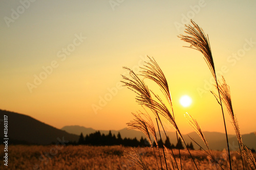 Fototapety, obrazy: Crops Growing On Field Against Sky During Sunset