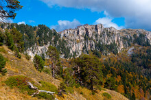 View Of A Rocky Cliffs, Pine Trees And An Autumn Valley. Adygea.