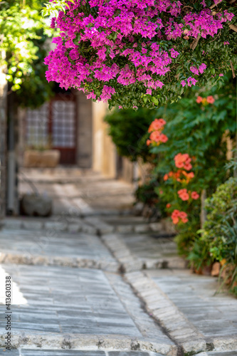 Fototapety, obrazy: Pink Flowering Plants On Footpath By Building