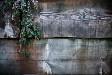 Wallpaper Of Moistened And Darkened Wooden Planks With Bush In The Upper Left Corner