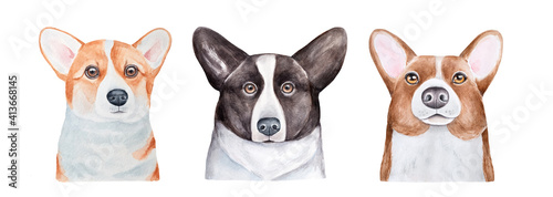 Water color illustration collection of three different cute Corgi dog portraits. Handdrawn watercolour sketchy painting on white, isolated clip art elements for design decoration, t-shirt print, card.