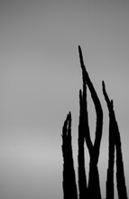 Silhouette Of A Plant