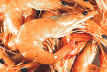 Tasty Shrimp Background..Fresh Prawns, Healthy Seafood, Close Up Photo.
