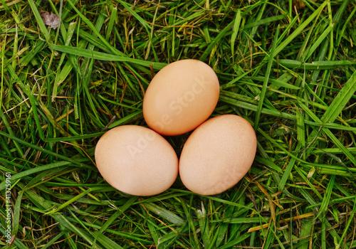 Three eggs on the mown grass. © voren1