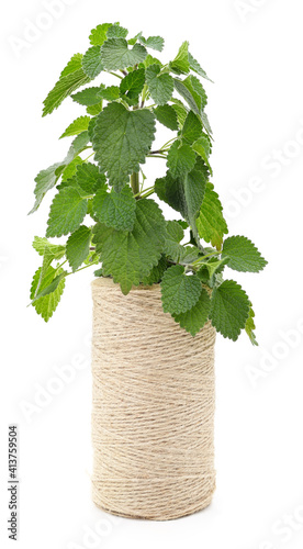 Nettle branch and spool of twine. © voren1