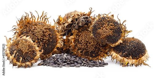 Dried sunflower with seeds. © voren1