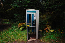 Telephone Booth In Forest